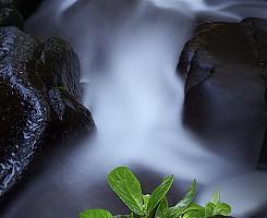 Spinach Creek