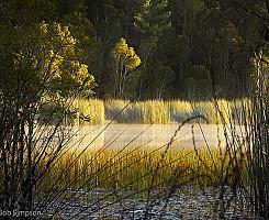 Morning Sun on Lake